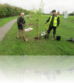 Planting of one of the Jubilee Trees at Marina Park